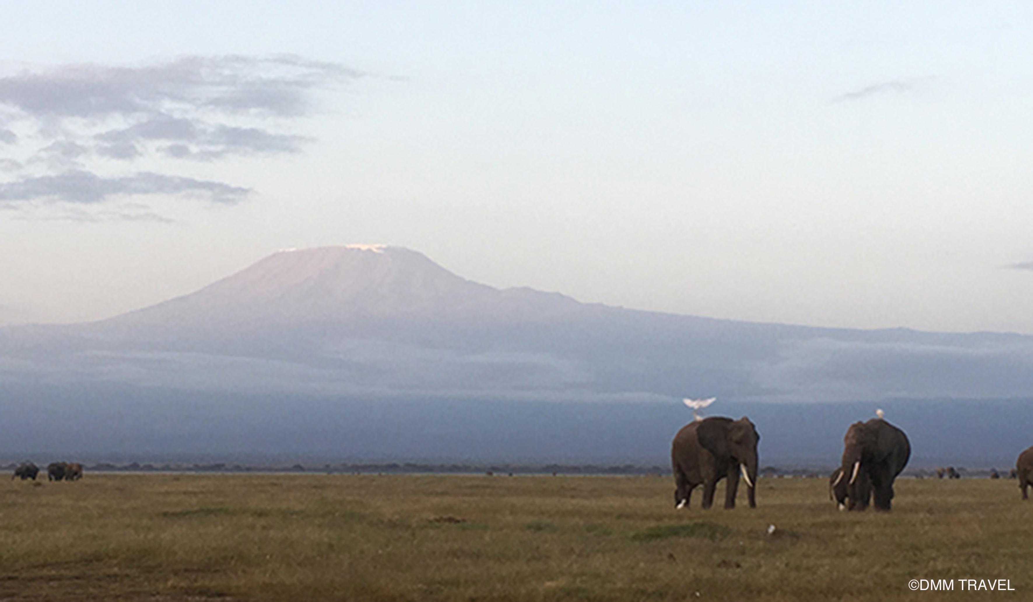 ケニアのアンボセリ国立公園